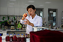 China - Ningxia - A wine technician analysing the grape juices from the latest harvest in the laboratory of Pernod Ricard Winery. <br /><br />Together with luxury goods conglomerate LVMH, Pernod Ricard is the most renowned internatio-nal brand to have invested in Ningxia wine. Its Helan Mountain Winery was previously a govern-ment facility. It owns 400 hectares of vines and has a total capacity of 12,000 tons of vintage.