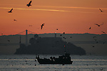 Herring fishermen are surrounded by hundreds of seals and birds as they fish off of the Sausalito coastline in the San Francisco Bay, California.