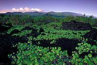 Traditional Hawaian burial sites on an ancient trail, Wainapanapa State Park, Hana, Maui