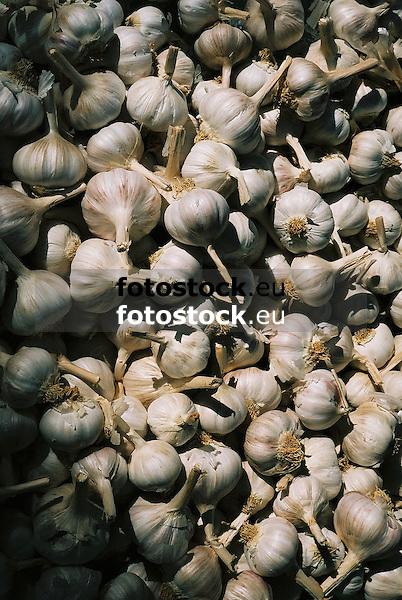 Garlic bulbs<br /> <br /> Ajo<br /> <br /> Knoblauchknollen<br /> <br /> bot.: Allium Sativum<br /> <br /> Original: 35 mm
