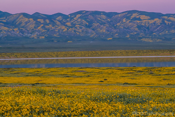 Sunset at Soda Lake in Carrizo Plain National Monument with field of yellow wildflowers and reflection in the lake