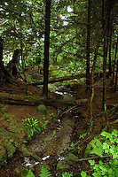 Forest stream in Stanley Park,Vancouver, British Columbia, Canada