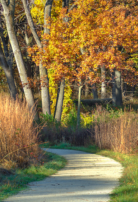 A trail through Oldfiiled Oaks Forest Preserve in DuPage County, Illinois provides a long look at autumn color
