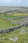 mur de pierres. ïle d'Inishmore.stone wall. Inishmore Island..