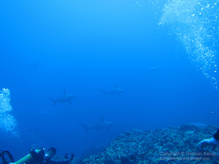 Gun Shui Bi, Green Island -- hammerheads slowly appearing out of the blue.