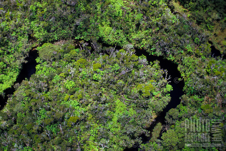 Meandering stream in native rainforest, Alakai Wilderness Preserve, Kauai. Aerial photo.
