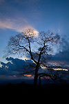 Clouds & Tree Silhouette at Sunset, Blue Ridge Parkway, NC
