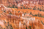 Bryce Canyon National Park, UT: Bryce Ampitheater hoodoos and sandstone pinnacles