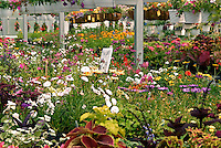 Annuals growing in a greenhouse.