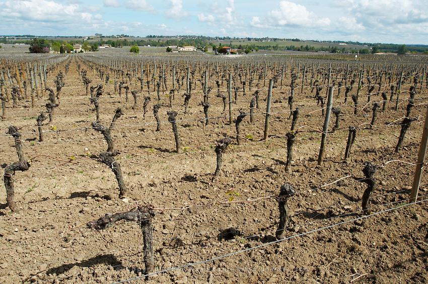 sandy gravelly soil ch moulin du cadet saint emilion bordeaux france