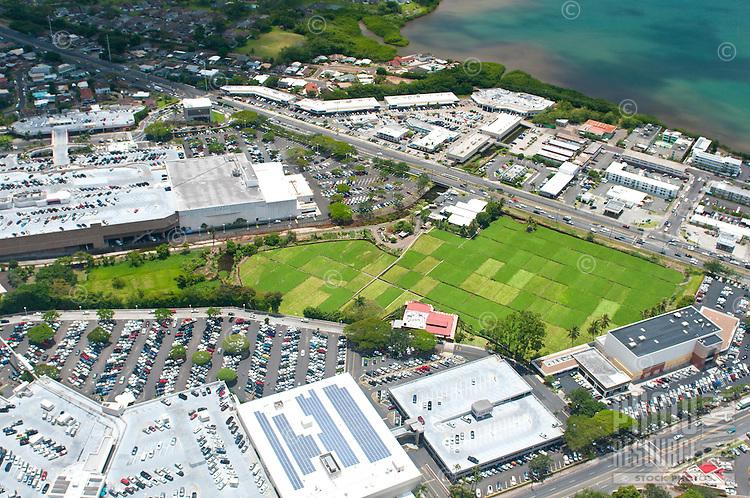 Aerial view of the watercress farm at Pearl Ridge