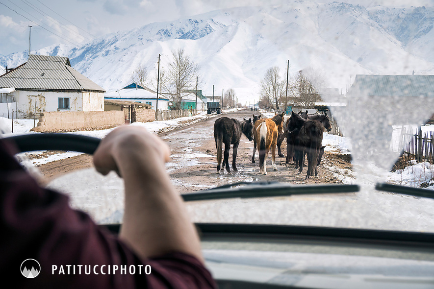 The view through the front window of a car while driving through Kyrgyzstan. Horses on a road.