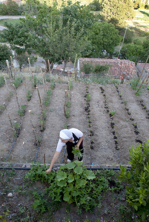 The owner of an agriturismo gathers herbs for dinner in Basilicata, ITALY