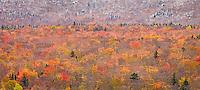 Autumn Glow, Mt. Washington