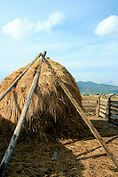 Siberian Rural Haystack - During the warmer months, which don't last long in Siberia, the area is primarily agricultural with vast farms and forests.