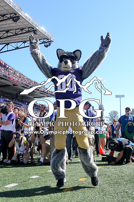 SEP 06, 2014: Washington mascot Harry was on hand during the game against Eastern. Washington defeated Eastern Washington 59-52 in Seattle Washington.
