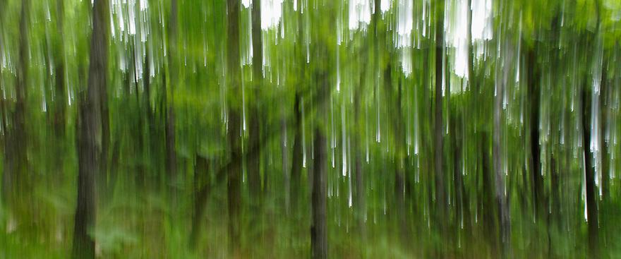 Oak forest, Konjsko region<br /> Lake Macro Prespa (850m) <br /> Galicica National Park, Macedonia, June 2009<br /> Mission: Macedonia, Lake Macro Prespa /  Lake Ohrid, Transnational Park<br /> David Maitland / Wild Wonders of Europe