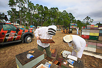 At Bob Harvey's apiary in West Palm Beach, Florida, the team of scientists from the Pennsylvania Department of Agriculture carries out a sampling of bees and larvae and installs the measuring instruments to monitor thermal and hydrometric variations inside the 12 hives and exterior variations during the journey.
