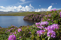 Ireland, County Galway, Connemara: Lough Fee with Rhododendrons and The Twelve Bens in distance | Irland, County Galway, Connemara: der Lough Fee mit Rhododendron im Hintergrund The Twelve Bens