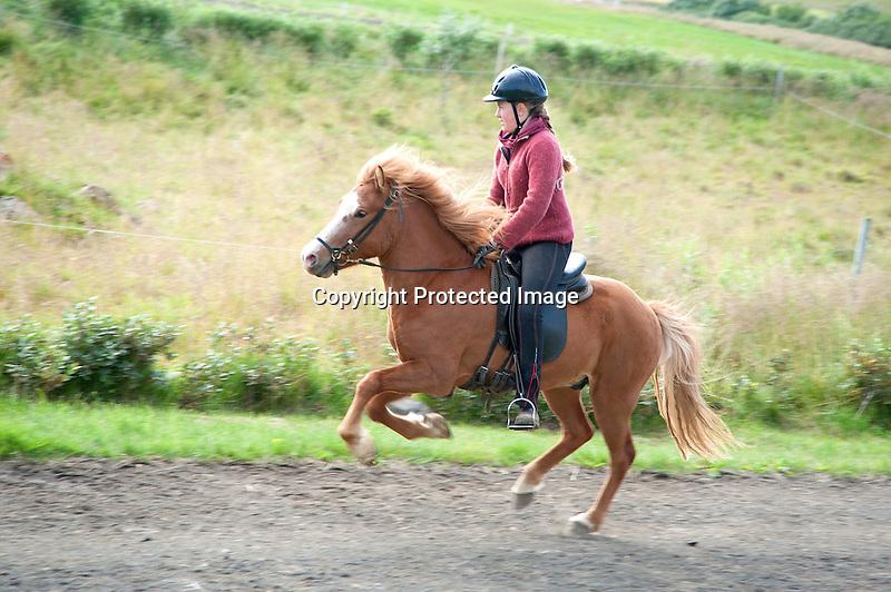 Icelandic Horse Rider