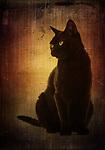 cat 49