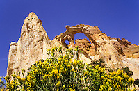 Kodacrome Arch and yellow flowers in Utah, USA