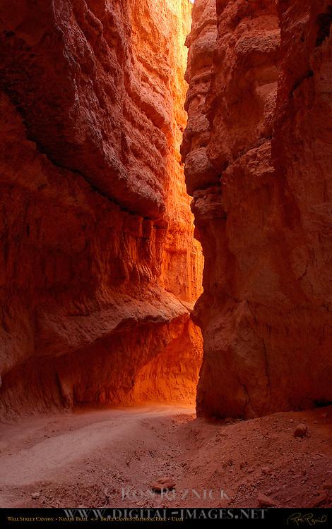 Wall Street Canyon, Navajo Trail, Bryce Canyon National Park, Utah