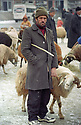 Turkey 2005 A man and his sheep at tne sheep market in Dogubayazit   Turquie 2005  Un homme avec son mouton au marché des moutons à Dogubayazit
