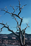 TWISTED BARREN TREE AGAINST BLUE SKY