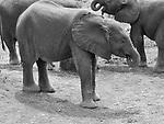 Kenya 1999-2001