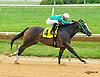 J Be K's Sonnet winning at Delaware Park on 8/1/16