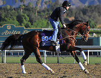 Worldly, trained by Brendan Walsh, trains for the Breeders' Cup Marathon at Santa Anita Park in Arcadia, California on October 30, 2013.