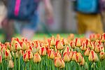 MC 4.18.17 Spring Scenic 07.JPG by Matt Cashore/University of Notre Dame