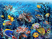 Steven-Michael, REALISTIC ANIMALS, REALISTISCHE TIERE, ANIMALES REALISTICOS, paintings+++++,USMG113,#a#, EVERYDAY ,puzzles,maritime,underwater,corral reef