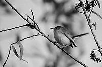 Bird-Film
