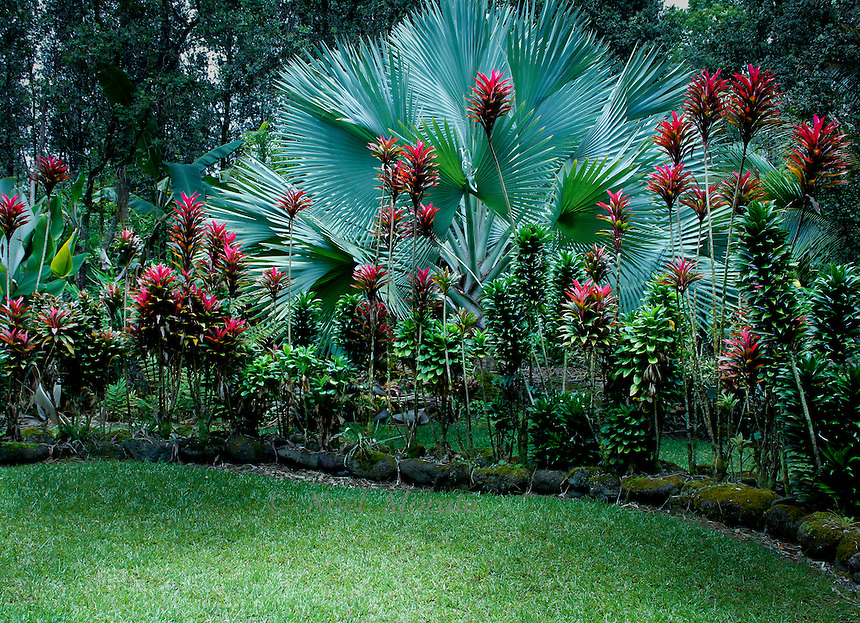 Hawaiian Tropical Gardens Containing Exotic Plants, Amazing Tropical  Scenery, Garden Vignettes, Exotic Plants