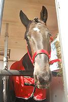 Horses in transit