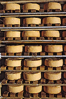Europe/France/Bourgogne/21/Côte d'Or/Epoisses : Fromagerie Berthault - Cave d'affinage