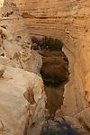 Israel, Negev. Ein Avdat national park in Wadi Zin