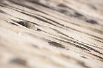 La Jolla, California; wavy patterns in the rocks along the shoreline, north of Scripps Pier on La Jolla Shore beach