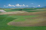 The Palouse, Whitman County, WA: Grain silo among rolling wheat fileds