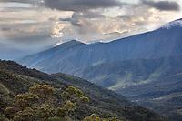 Tapichalaca Reserve; Ecuador, Prov. Zamora-Chinchipe