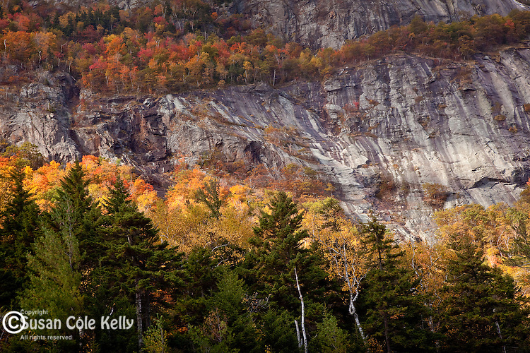 Fall foliage on Mt Willard, Crawford Notch State Park, White Mountains, NH, USA