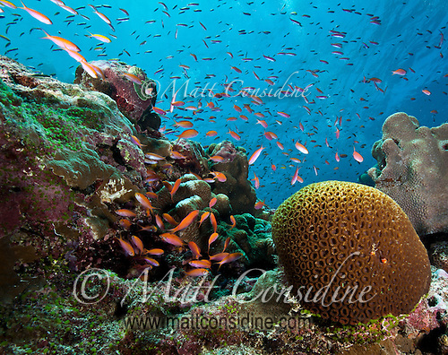 Abundant Sea Life, Yap Micronesia (Photo by Matt Considine - Images of Asia Collection) (Matt Considine)