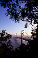 Bay Bridge seen between trees in San Francisco, California, USA
