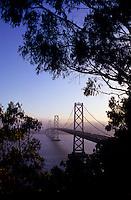 Bay Bridge seen between trees in San Francisco, California, USA
