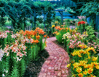 Multi-colored lillies and brick path. Horticultural Center of the Pacific. British Columbia, Canada.