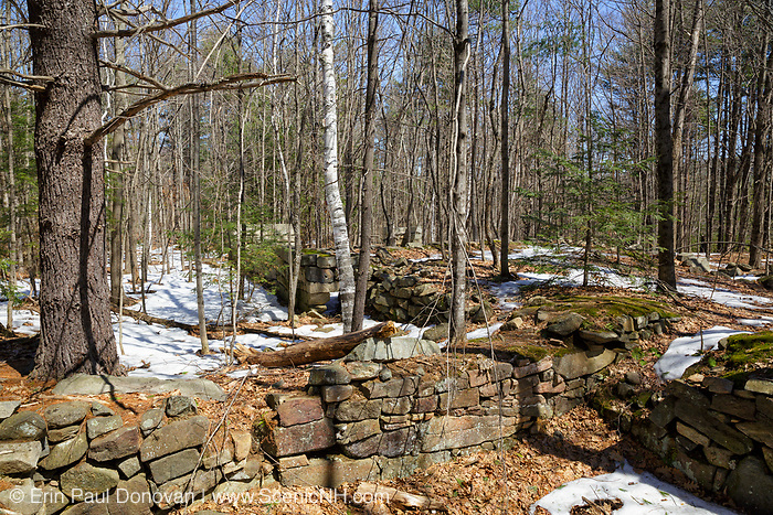 An abandoned foundation from the 19th - 20th century mountain settlement in the forest of Pawtuckaway State Park in Deerfield, New Hampshire USA during the spring months.