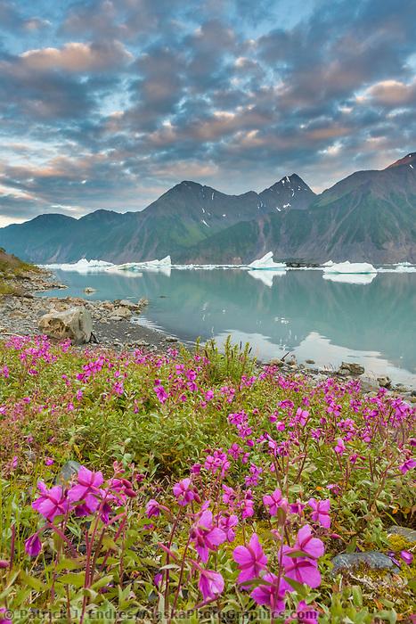 Dwarf fireweed and icebergs in Bear Glacier Lagoon, Kenai Fjords National Park, southcentral, Alaska.