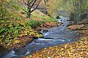 Wildboarclough, Peak District National Park, Cheshire. November.